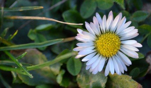 Wiosna – fotografia przyrody